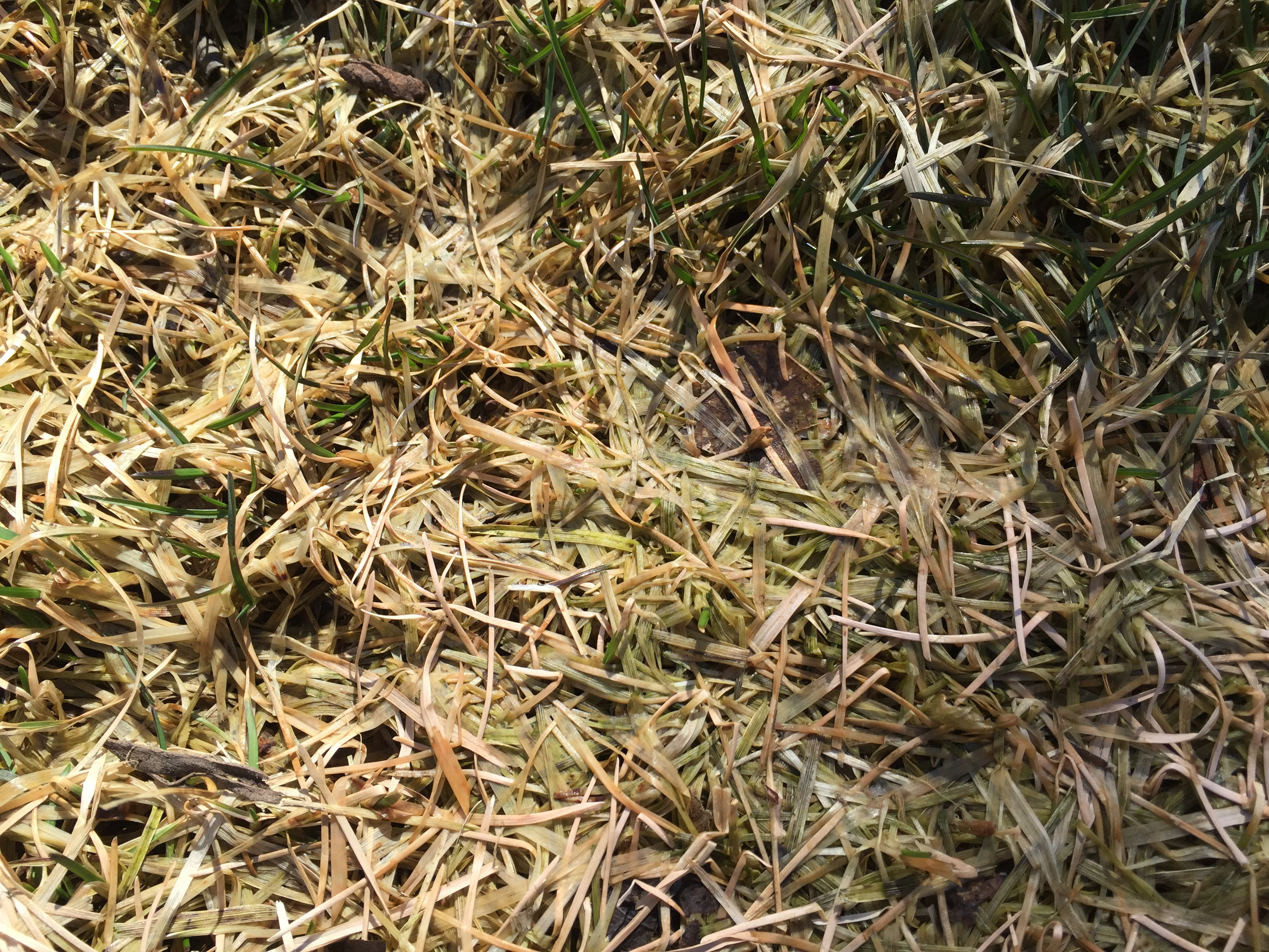 Lawn Care: When It Comes To Early Spring Lawn Care, Donu0027t Start Too Early.  Allow The Lawn To Completely Dry Out And Turn Completely Green Before  Bringing ...